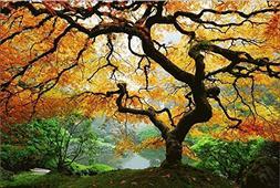 Startonight Canvas Wall Art Maple Tree, Nature USA Design fo