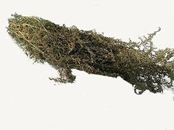 Natural air dried SWEET ANNIE herb bunch- natural lightly fr