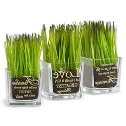 National Tree Set of 3 Assorted Square Glass Pot with Artifi