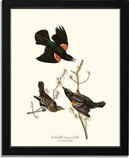 Bird Print Audubon Vintage Art: Red-winged Blackbird - Ready
