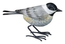 Chickadee Bird Replica  Metal Yard Decor, hand painted, w/ l