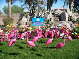 Flamingo Extravaganza - This is a bouquet of Pink Flamingo L
