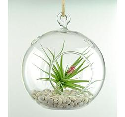 "Globe Terrarium 5"" Diameter Round Glass Hanging - Planter Ga"