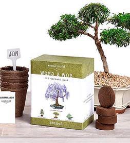 Grow 4 Bonsai Trees Starter Complete Kit Seeds NEW Germinati
