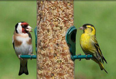 Lyric Bird Seed Tunes No -