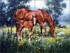 Ceramic Tile Mural Backsplash Shower Sorenson Horses Equine
