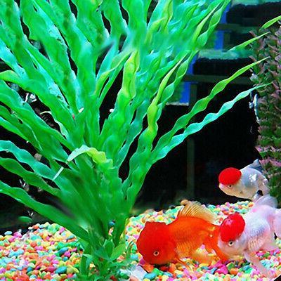 Water Seeds Fish Tank