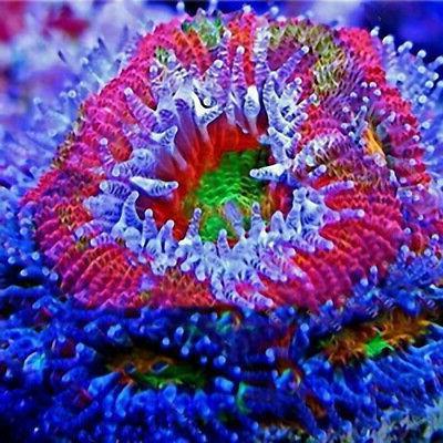 Egrow 1000 Aquatic Water Seeds Seeds Fish