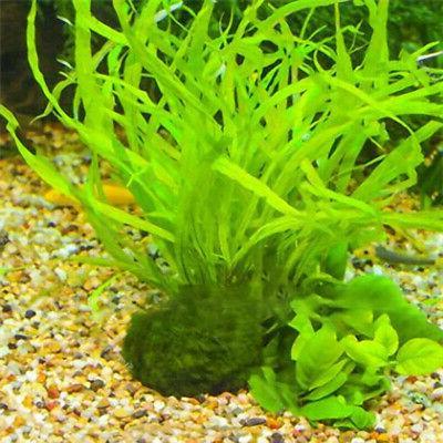 Egrow Aquatic Water Seeds Aquarium Seeds Tank Deaoration