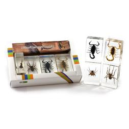 Scorpion & Spider Collection 4 pc Set